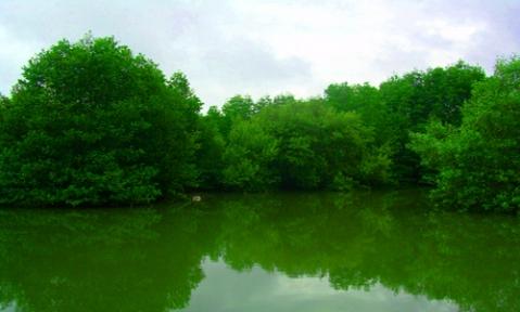 mangrove-sma-negeri-8